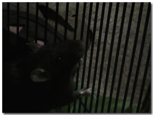 Nellie1